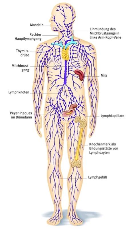 Lymphödeme