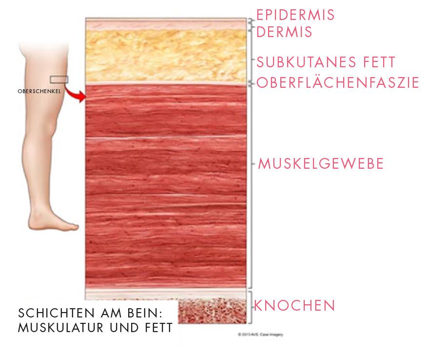 Anatomie der Beine